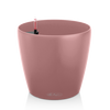 CLASSICO Color 18 pearl rose thumb