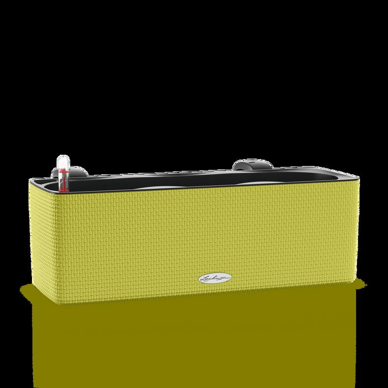 CUBE Color Triple citron vert