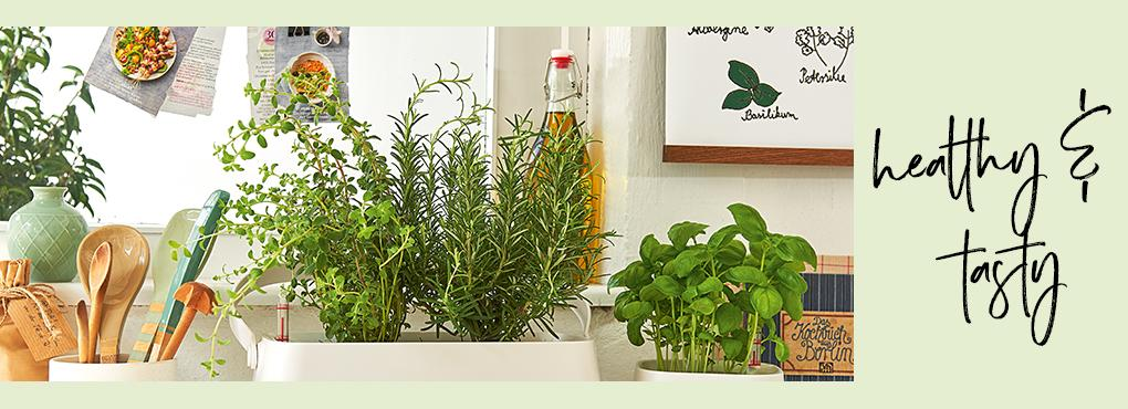 HERB GARDEN in the kitchen
