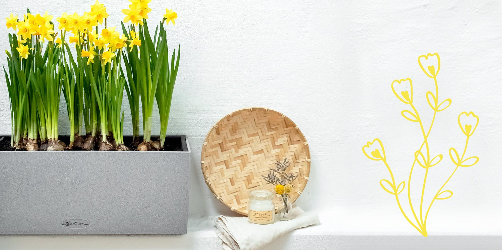 Daffodils planted in BALCONERA Stone 50
