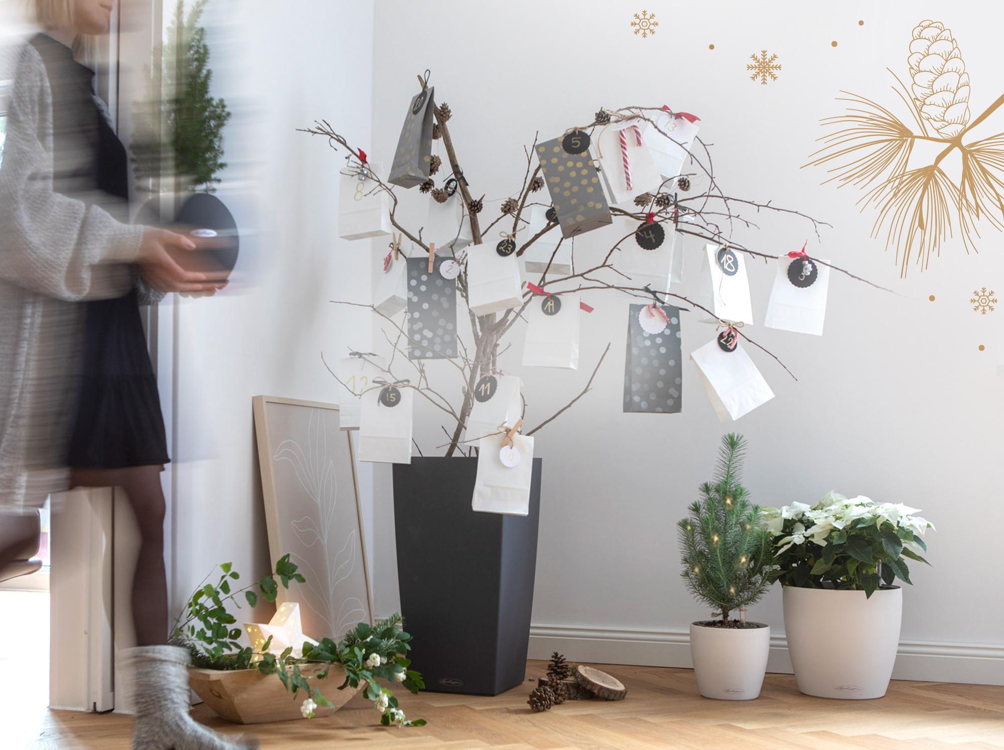 La collection de couleurs LECHUZA pour une ambiance de Noël