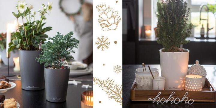 Décoration de Noël avec les DELTINI
