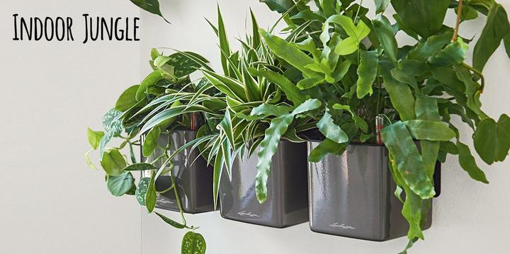 Indoor Jungle with the Green Wall Home Kit Glossy