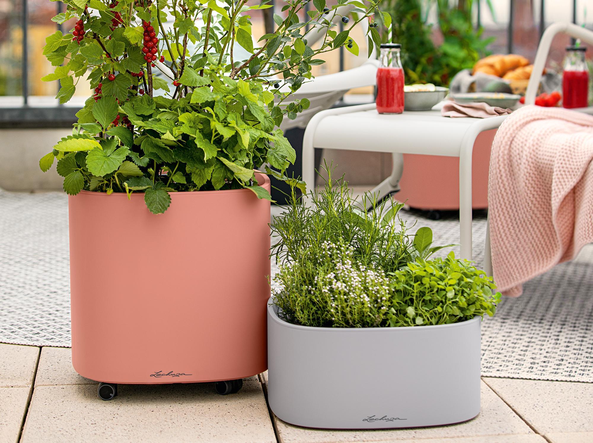 PILA - Une oasis verte et atucieuse pour votre balcon
