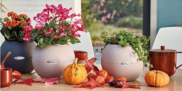 LECHUZA PURO Color 20 - Small planter with big effect