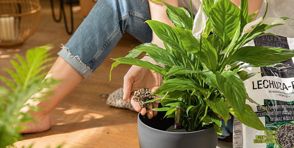 Πώς φυτεύω το LECHUZA