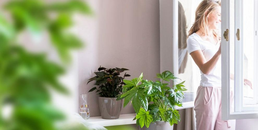 Spring cure for your indoor plants