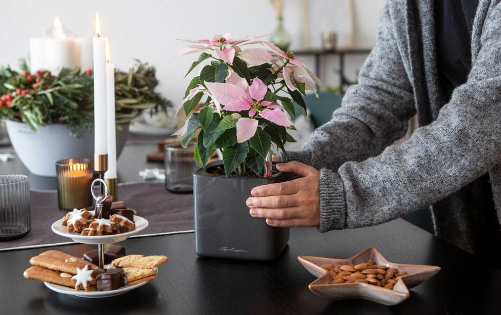 'Charmingly simple Christmas decoration: Simple ideas