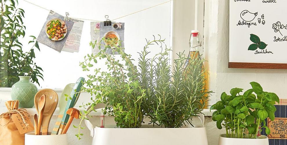 Herb garden<br />in the kitchen