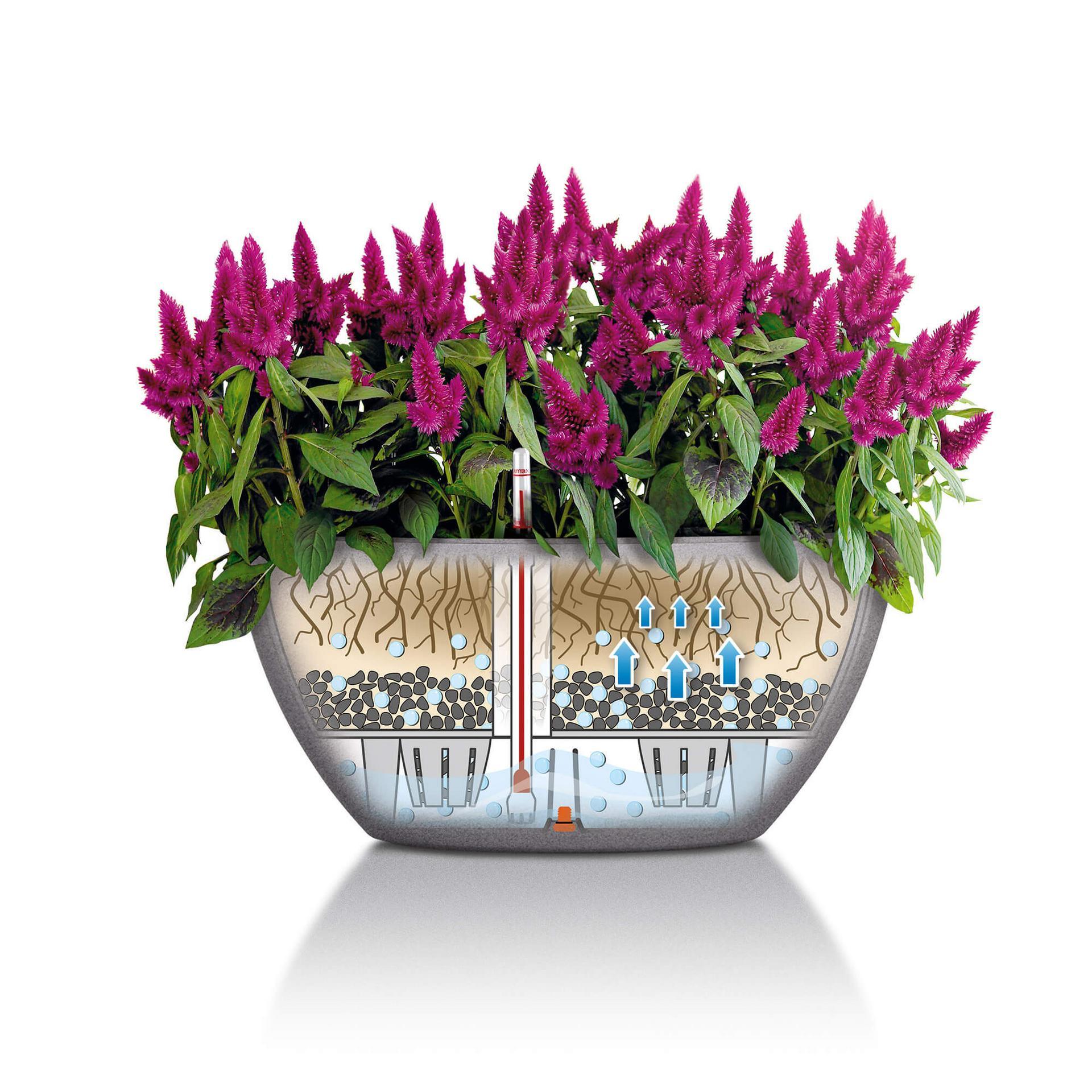 Цветов, заказ цветов из голландии комнатных растений