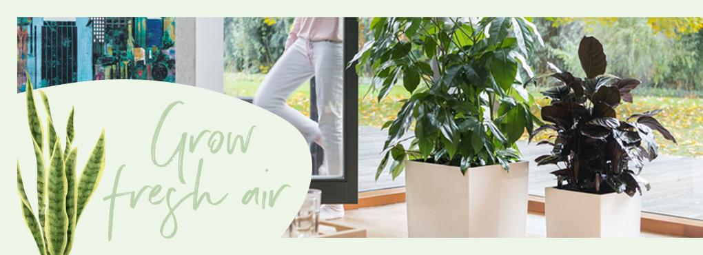 A SPRING TIME MAKEOVER for your houseplants