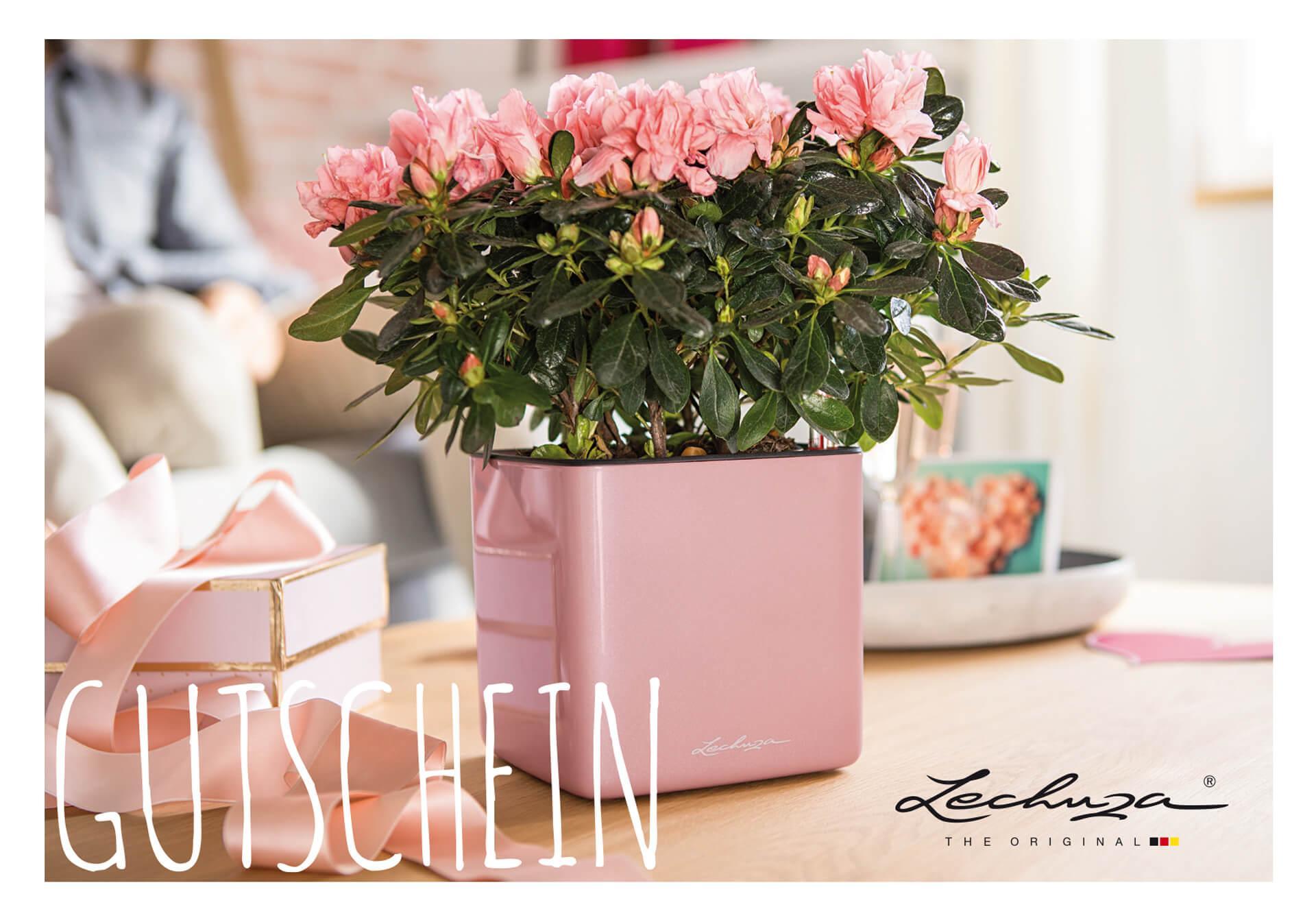 LECHUZA Geschenk-Gutschein