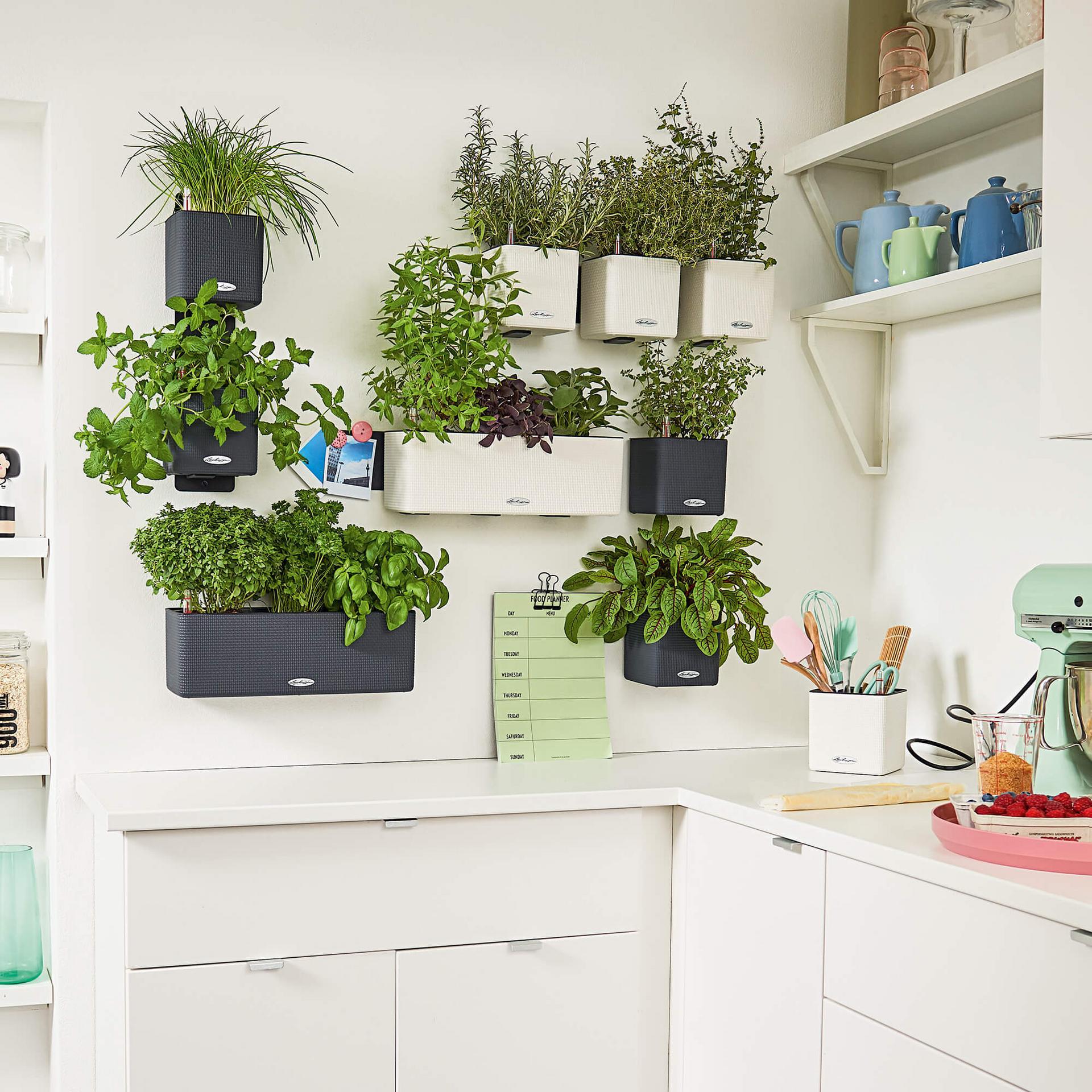 le_green-wall-color_product_addi_02