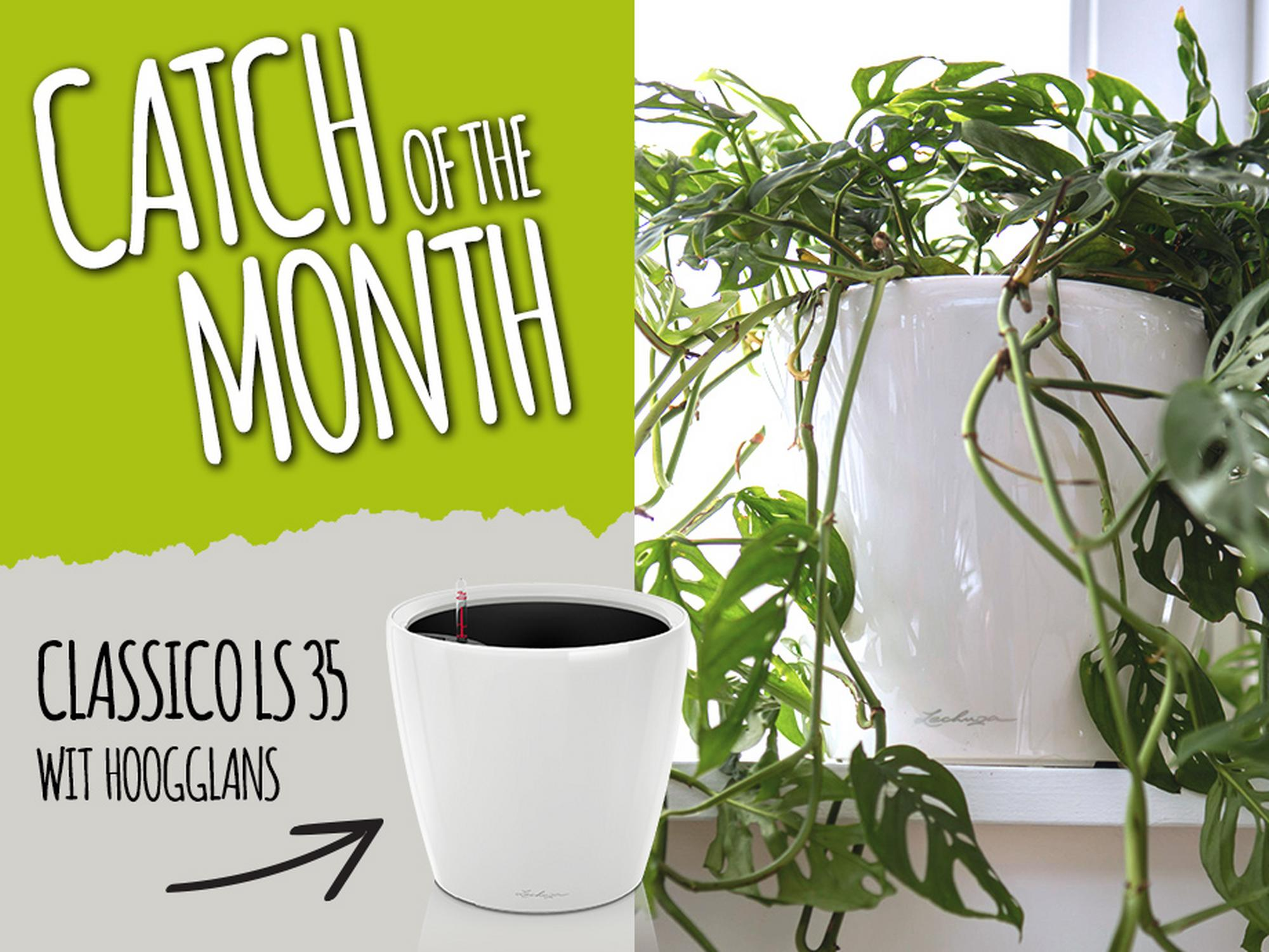 Catch of the Month: 15% korting op de CLASSICO LS 35 in wit