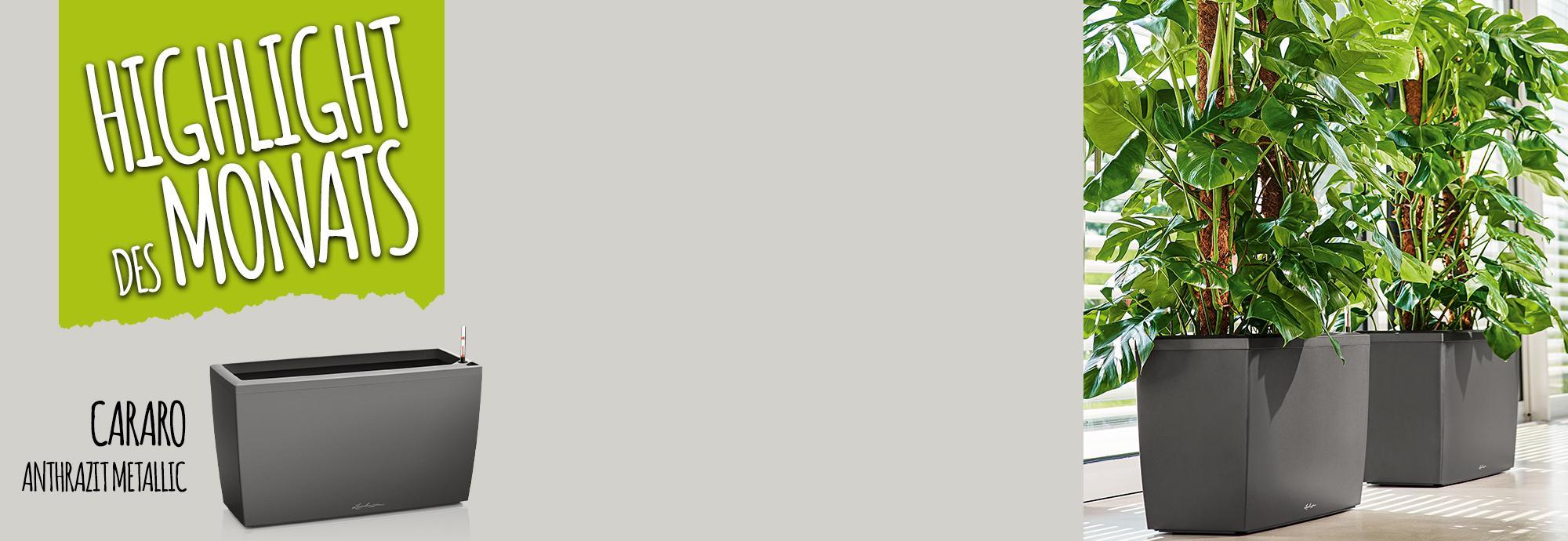 Catch of the Month: 15 Prozent sparen beim Kauf von CARARO anthrazit metallic