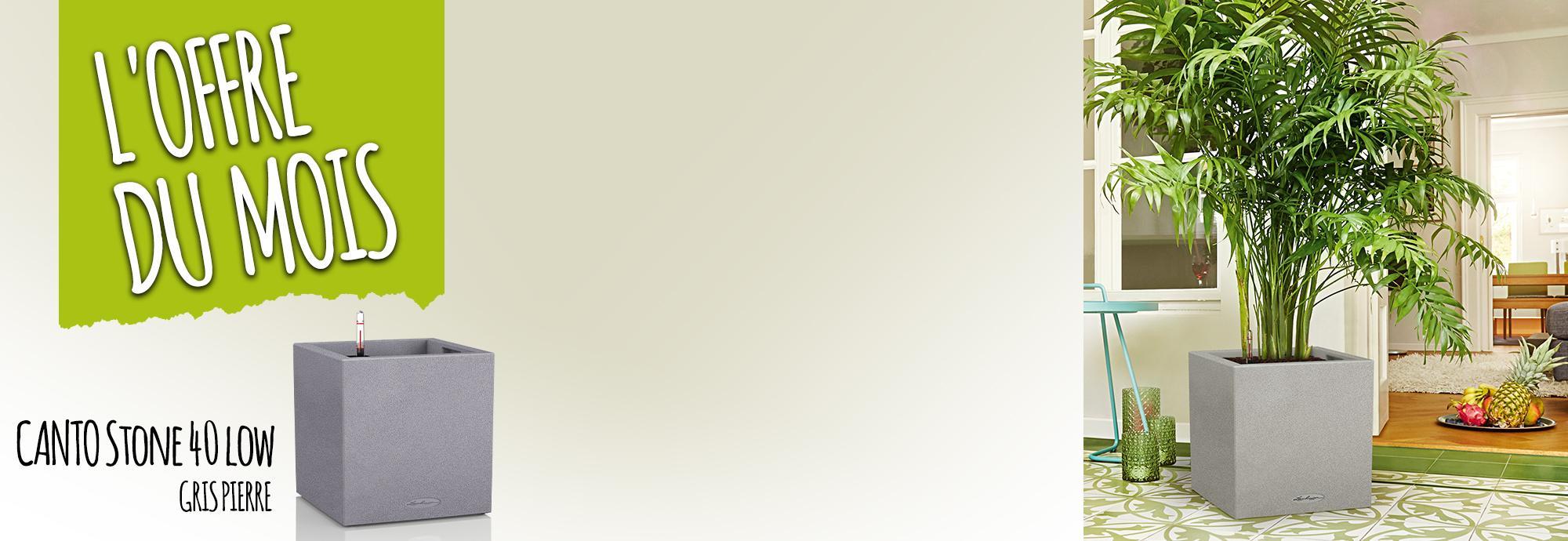 L'offre du Mois: 15% de réduction pour l'achat du CANTO Stone 40 low gris pierre