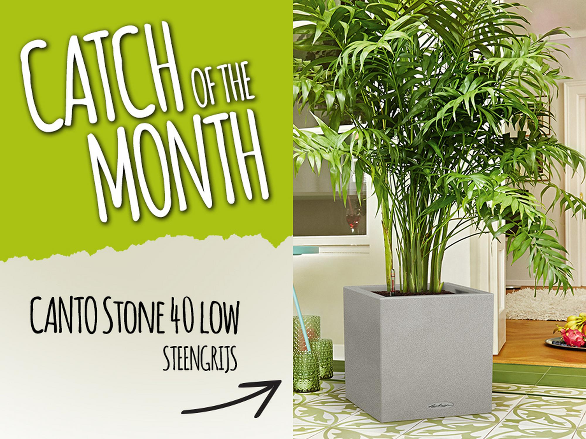 Catch of the Month: 15% korting op de CANTO Stone 40 low steengrijs