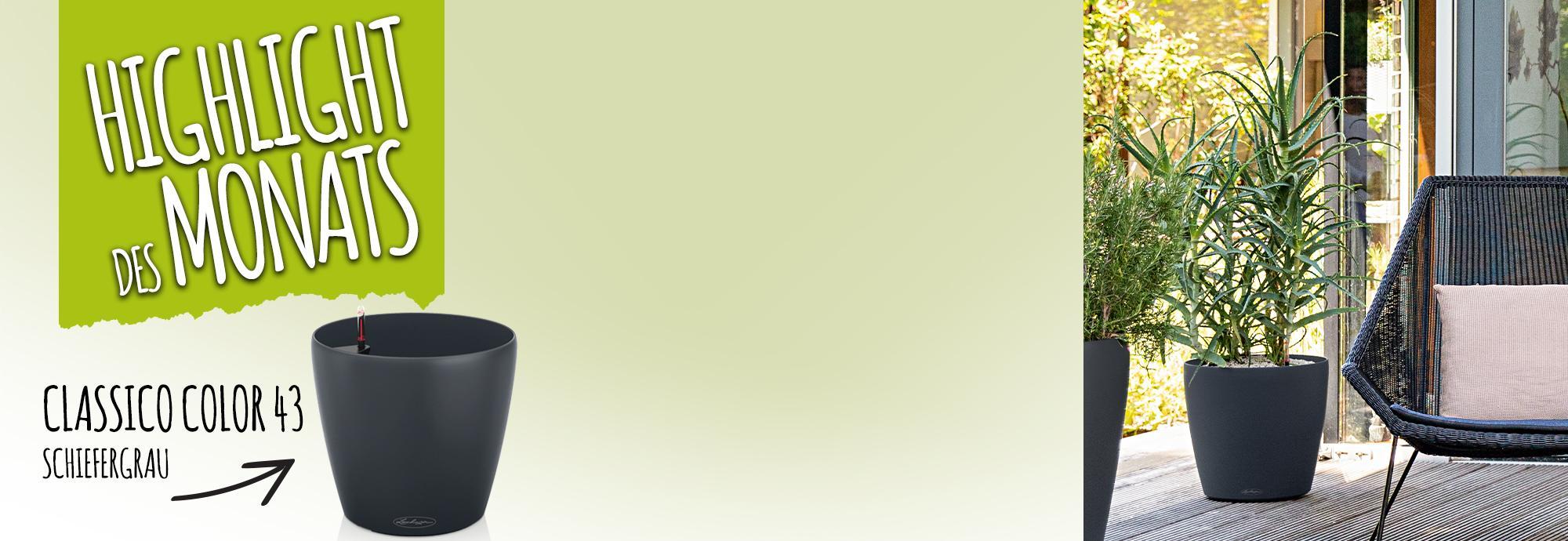 Catch of the Month: 15 Prozent sparen beim Kauf von CLASSICO Color 43 schiefergrau
