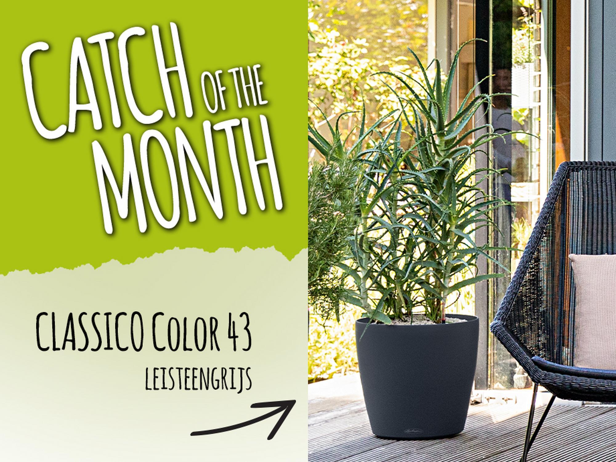 Catch of the Month: 15% korting op de CLASSICO Color 43 leisteengrijs