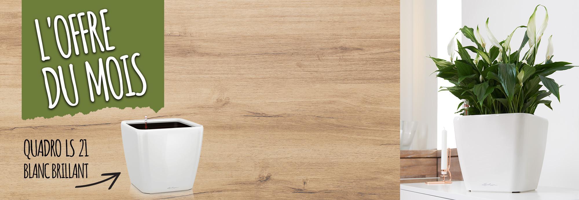 Best seller du mois de octobre : 15% de réduction pour l'achat du QUADRO LS 21 blanc brillant