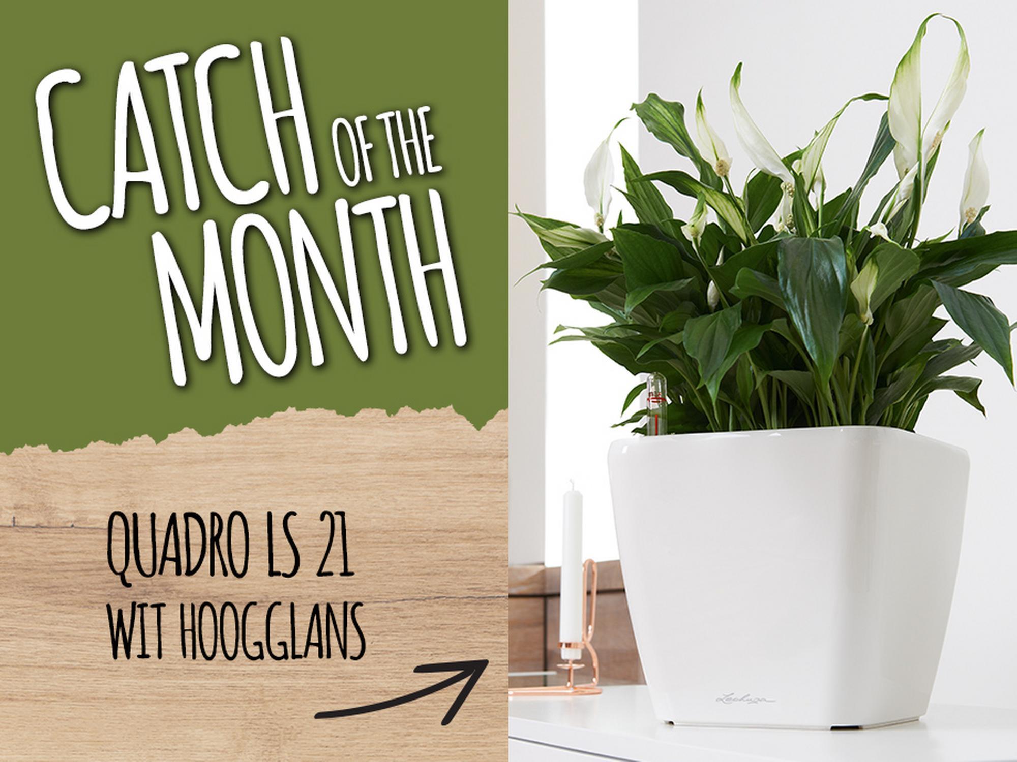 Catch of the Month: 15% korting op de QUADRO LS 21 wit hoogglans