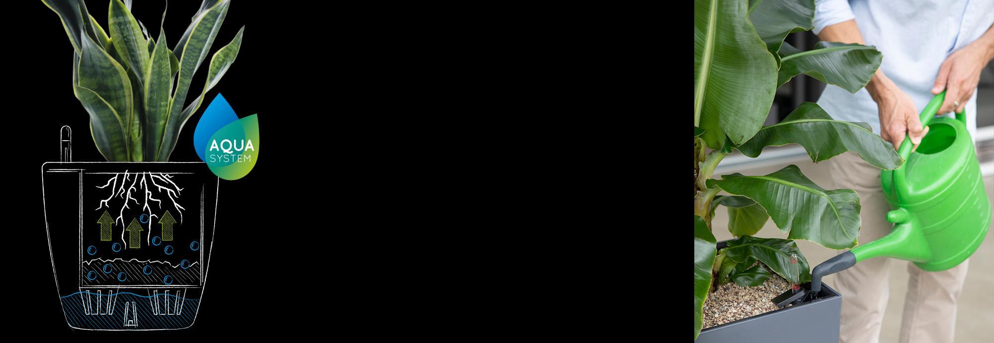 LECHUZA – лучший уход с инновационной системой полива
