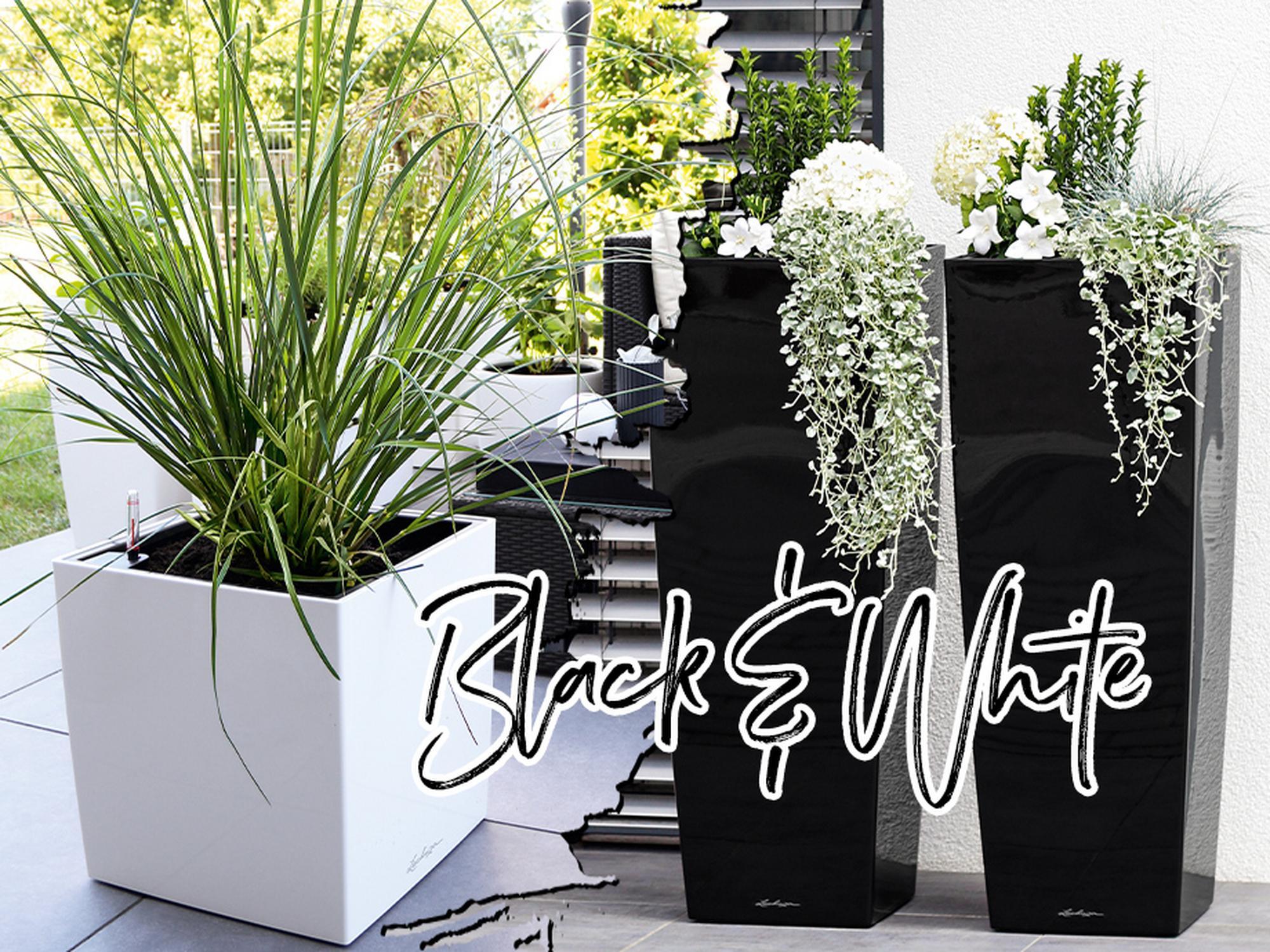 10% op zwart-witte premium plantenbakken