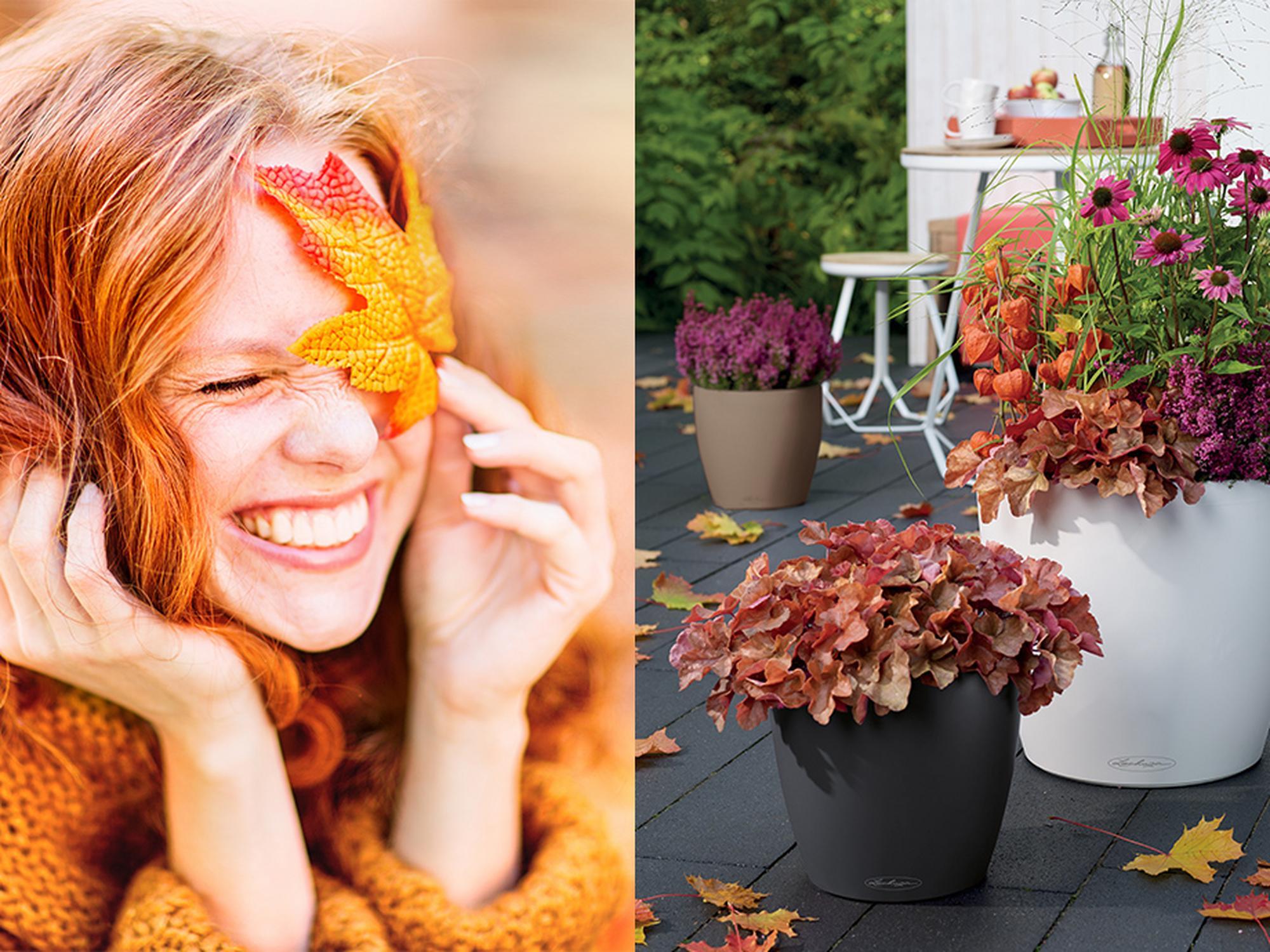 Suspiro de otoño con CLASSICO Color