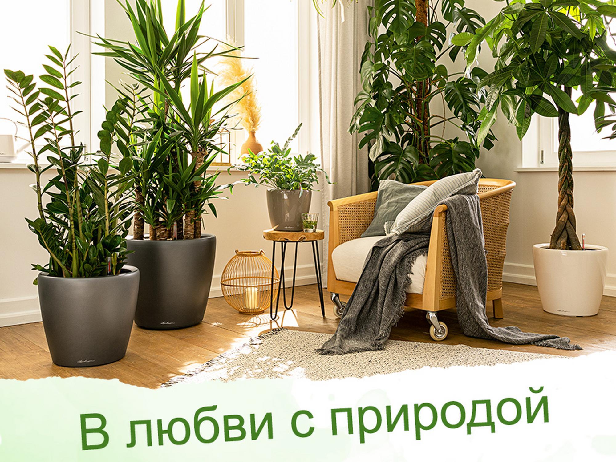 Растения любят CLASSICO LS