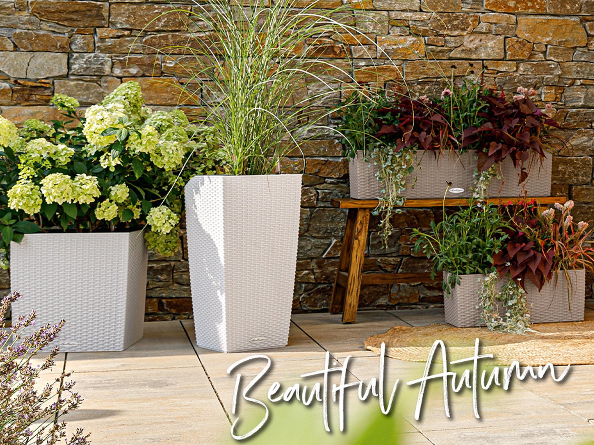 Herbstbepflanzung mit LECHUZA. Gute Laune für graue Tage!
