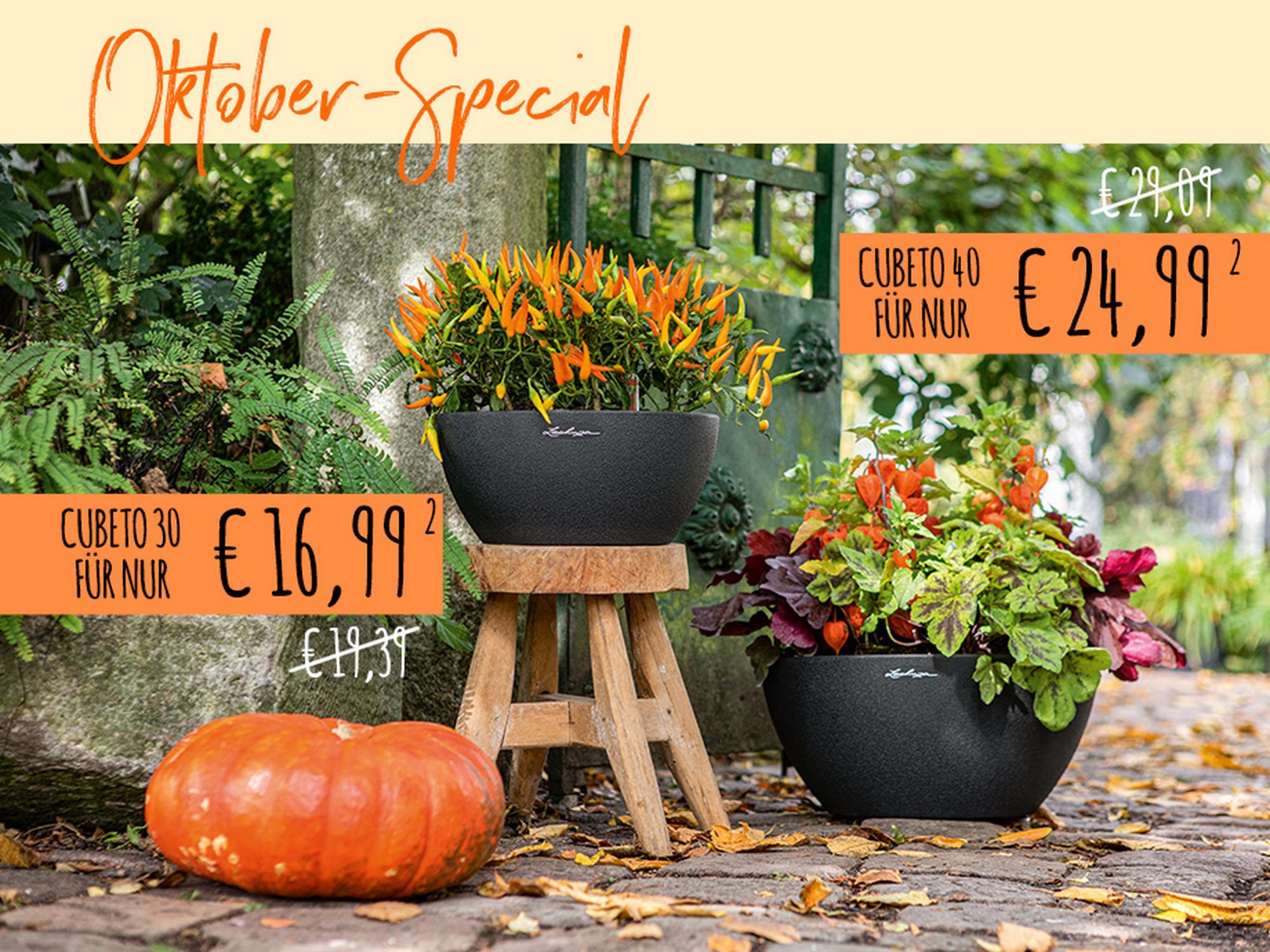 Oktober-Special: Herbstliche Rabatte auf alle CUBETOs