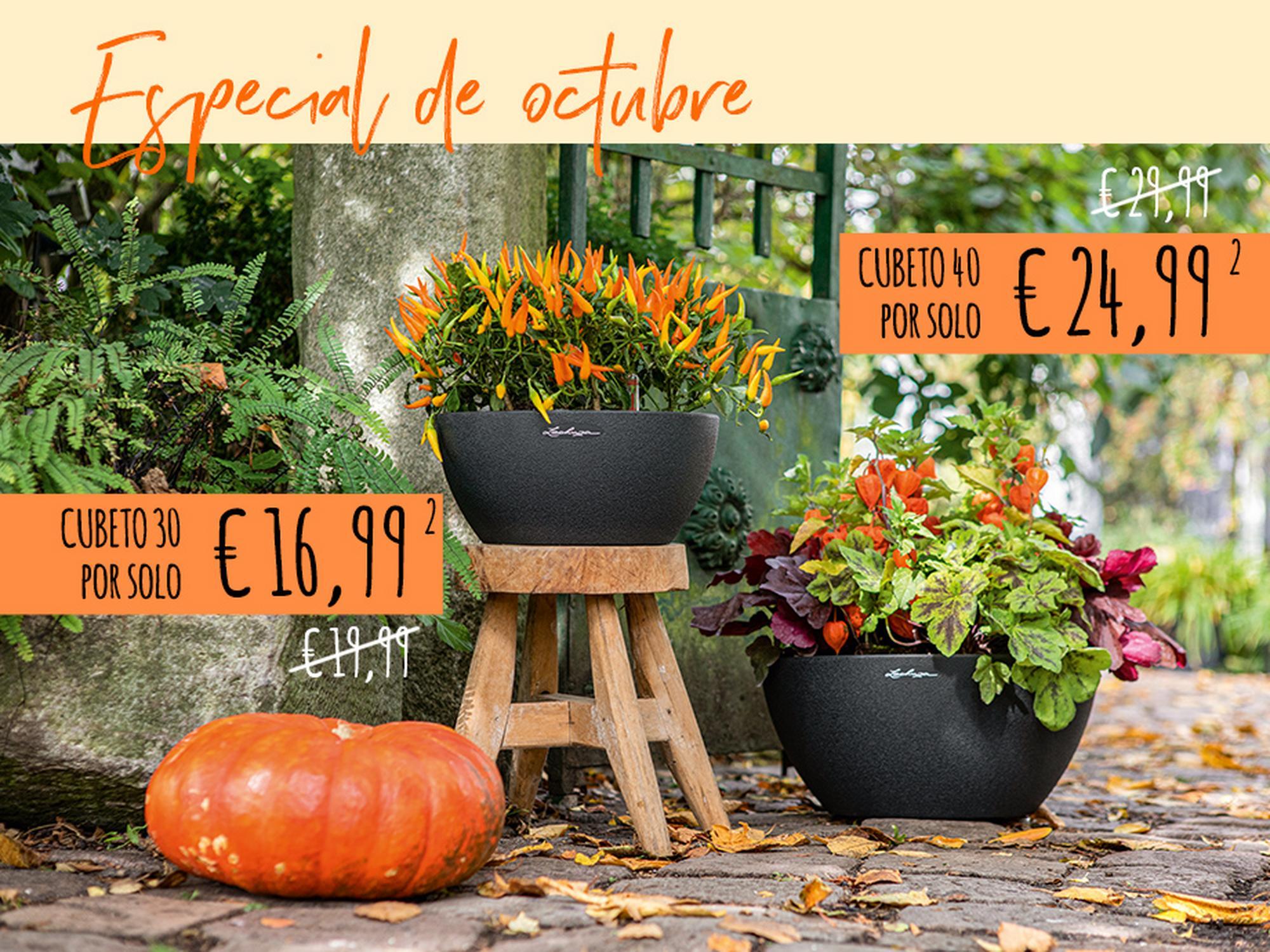 Descuentos de otoño en todas las CUBETO