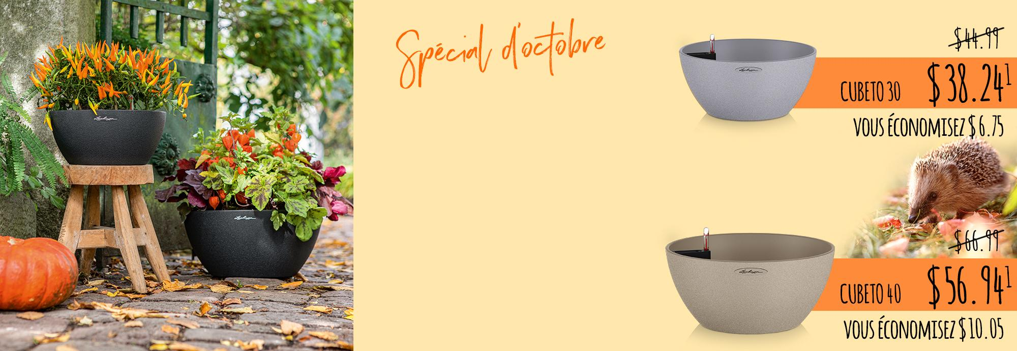 Spécial d'octobre: Creative Autumn Decoration with CUBETO Stone