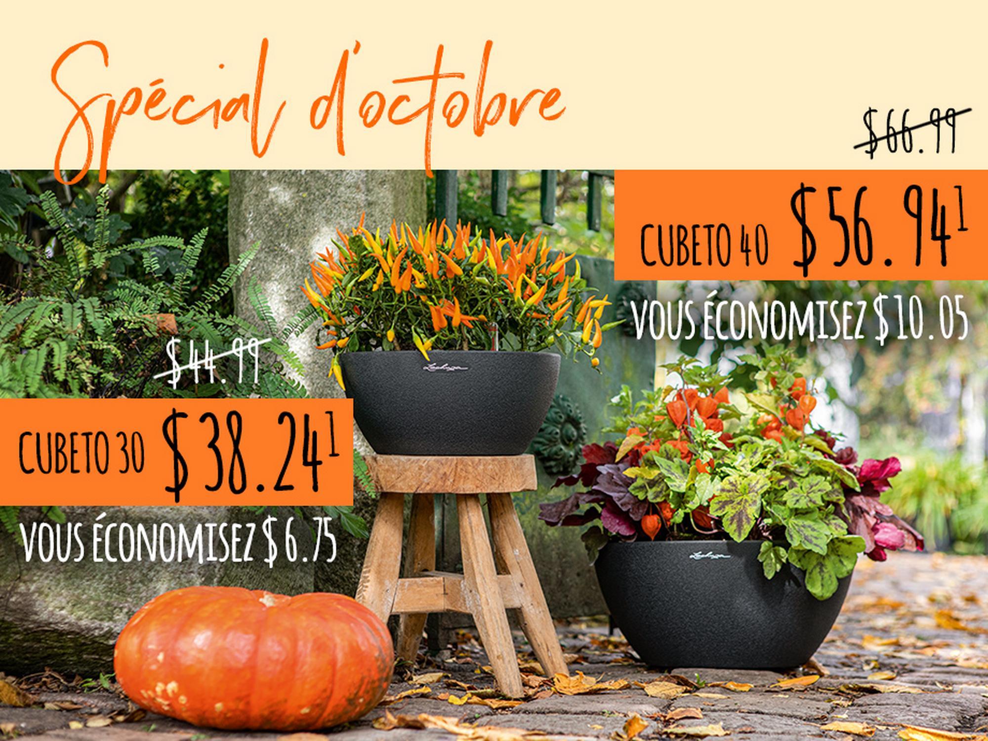 Spécial d'octobre: Décoration créative d'automne avec CUBETO Stone