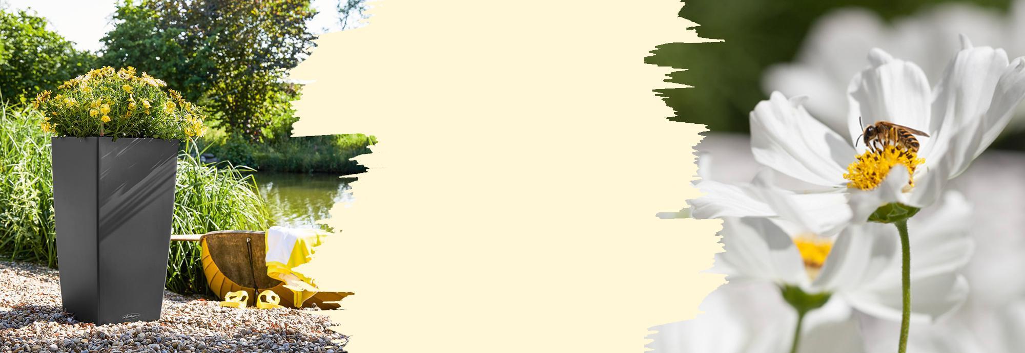 Un classique de LECHUZA : CUBICO Color