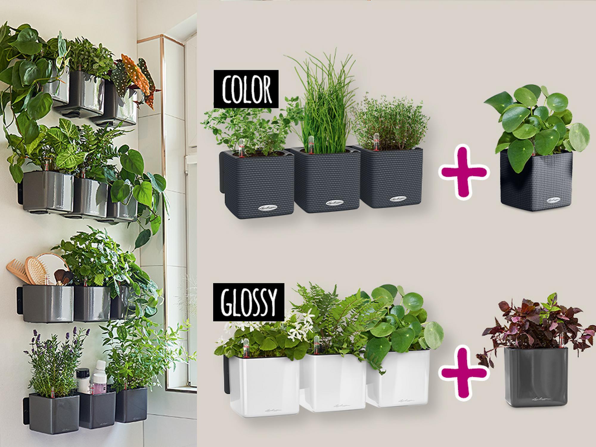 Beim Kauf eines Green Wall Home Kits gibt es einen CUBE 14 gratis dazu