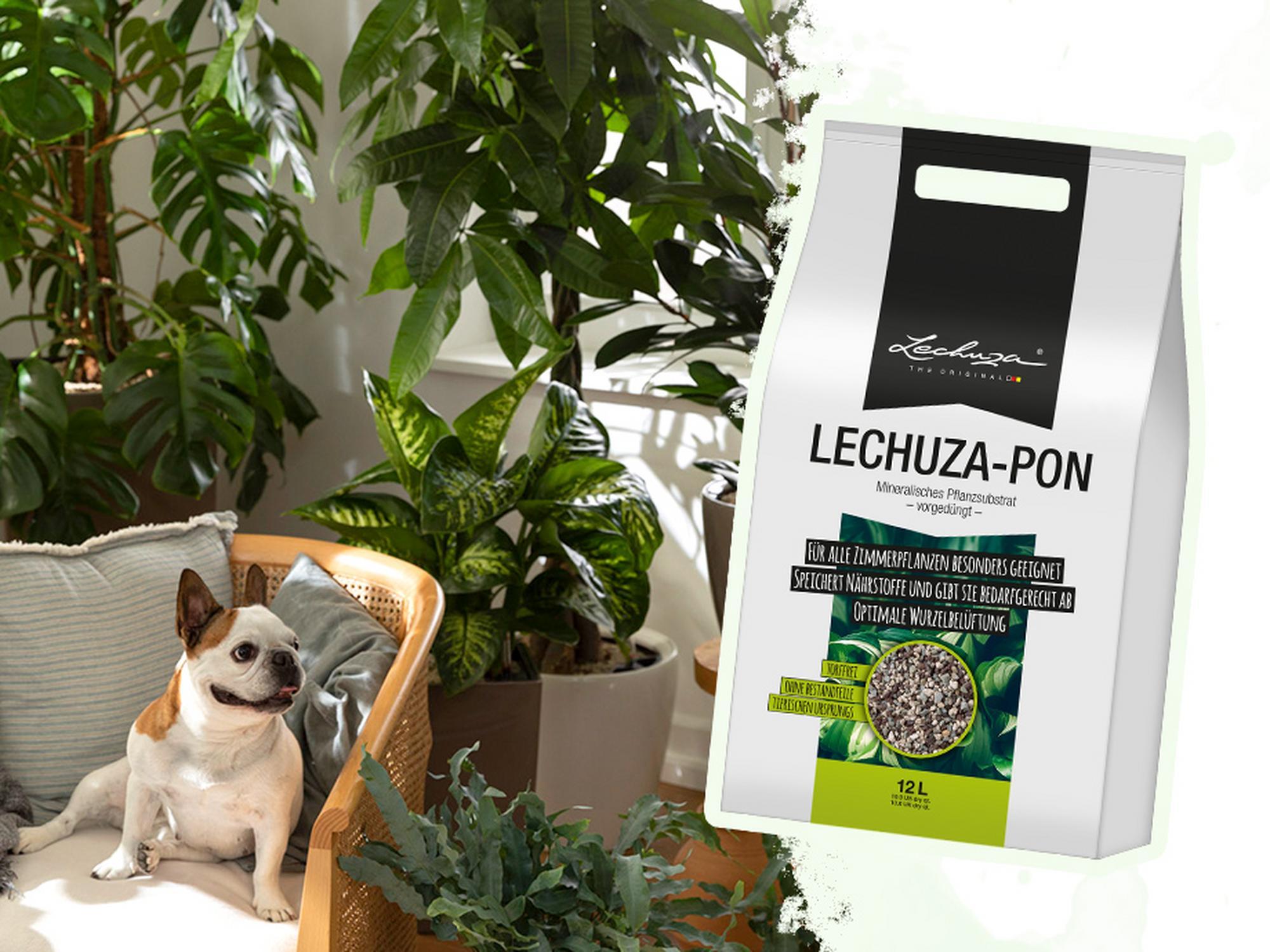 Дарим LECHUZA PON для комфорта ваших растений