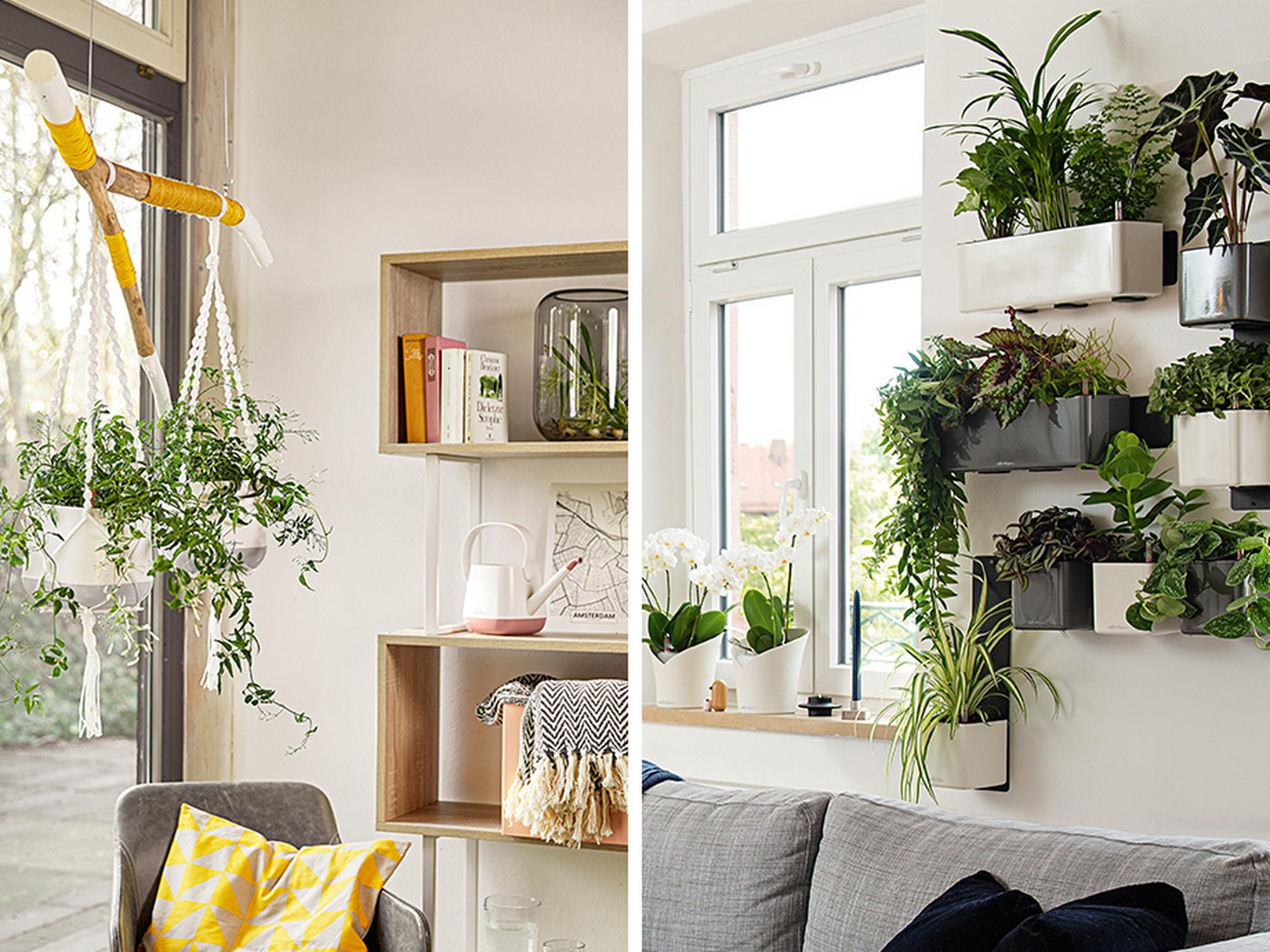 'Buy any planter and get a 7% discount on accessories + Free delivery*