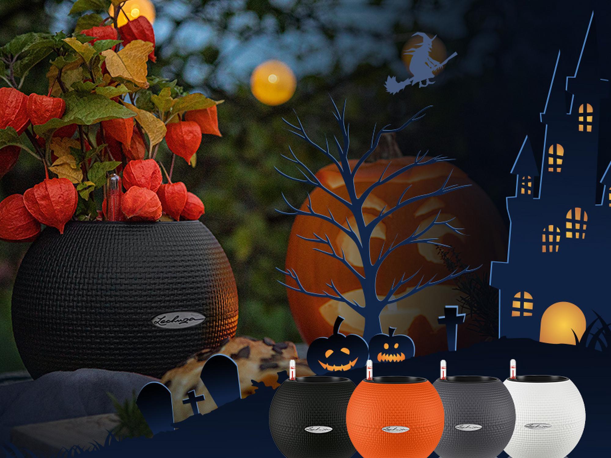 'Halloween-Special: 2 PURO 20 für nur 24