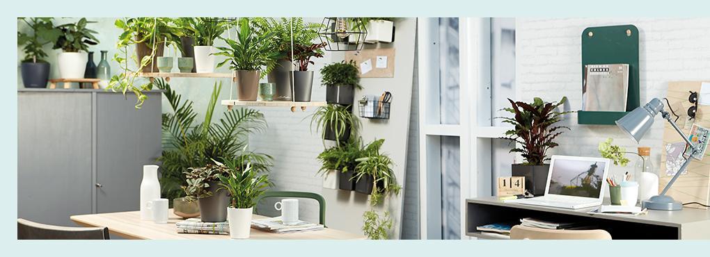 Свежие идеи для домашнего офиса
