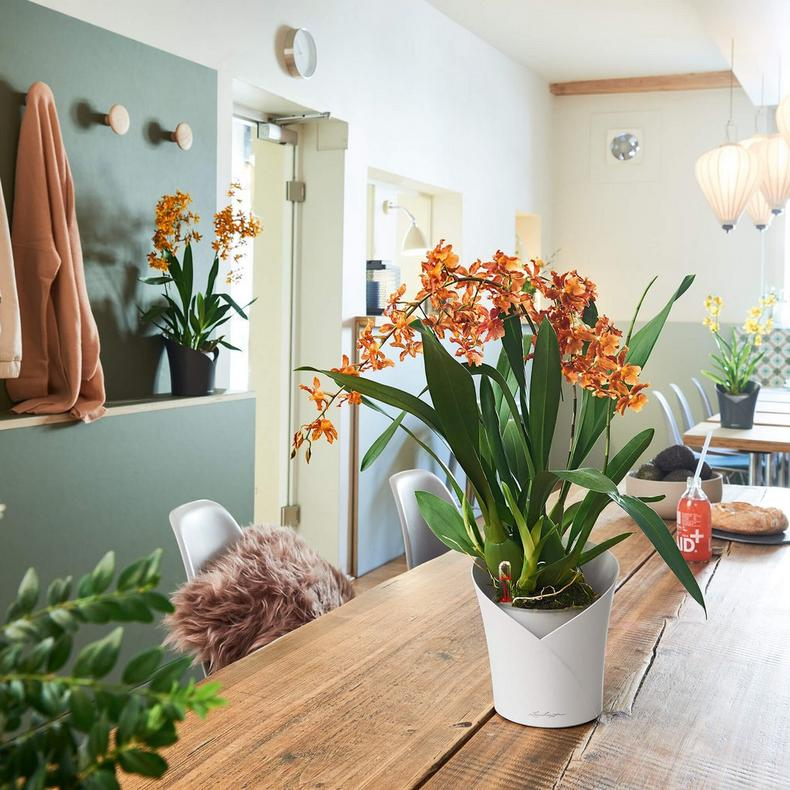 le_orchidea_product_addi_01