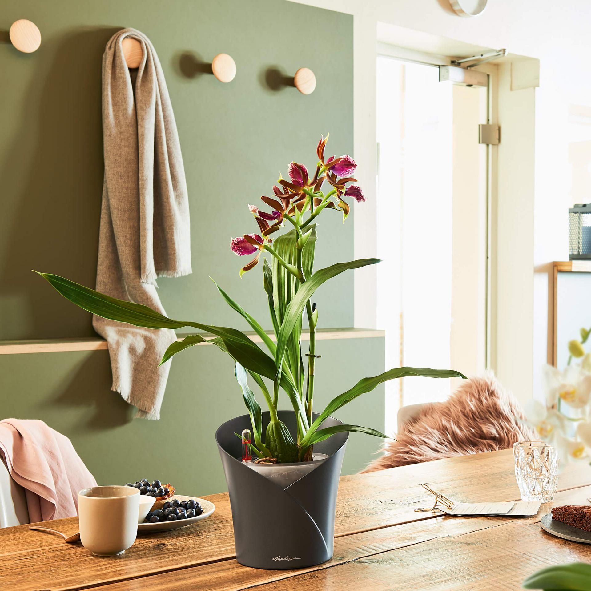 le_orchidea_product_addi_02