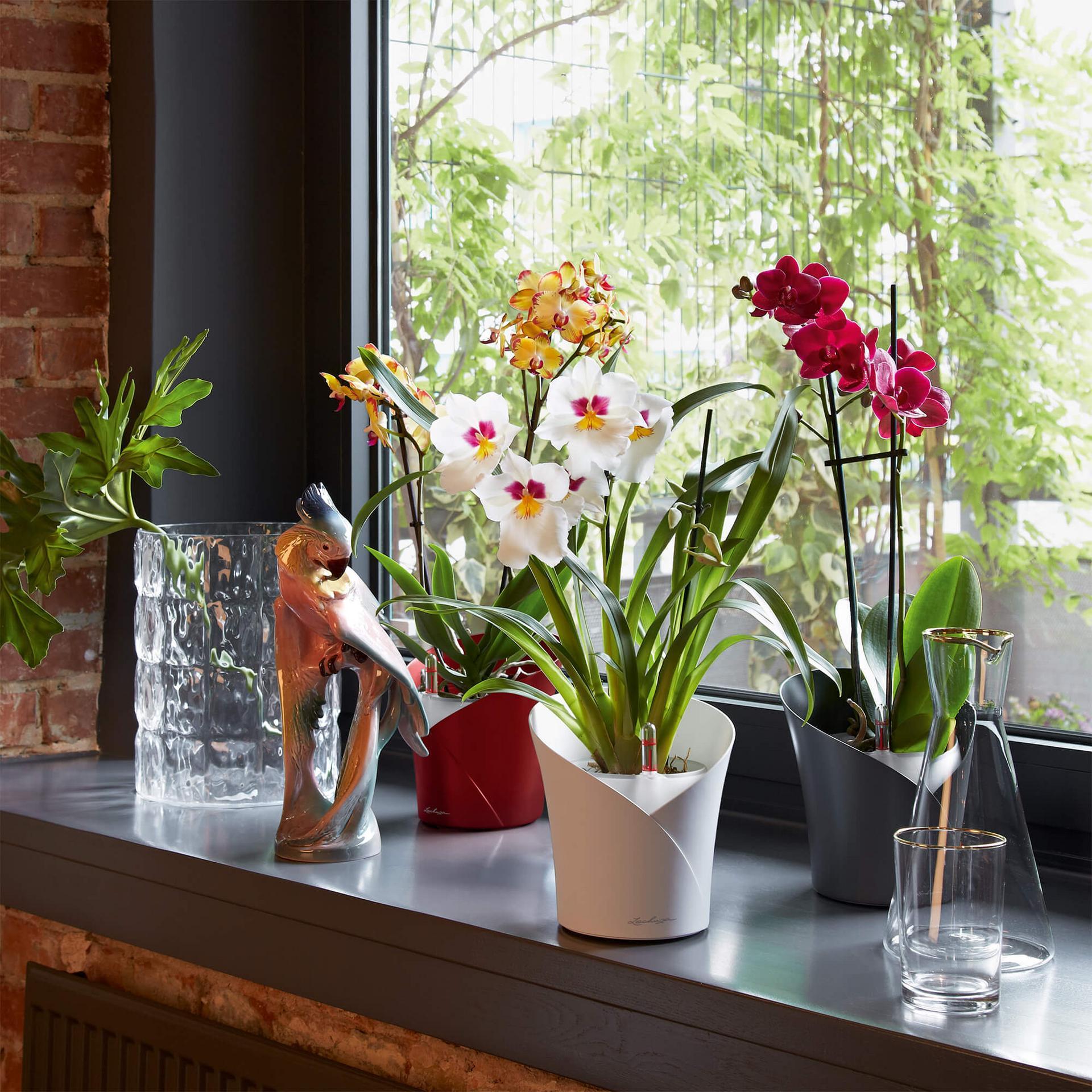 le_orchidea_product_addi_03