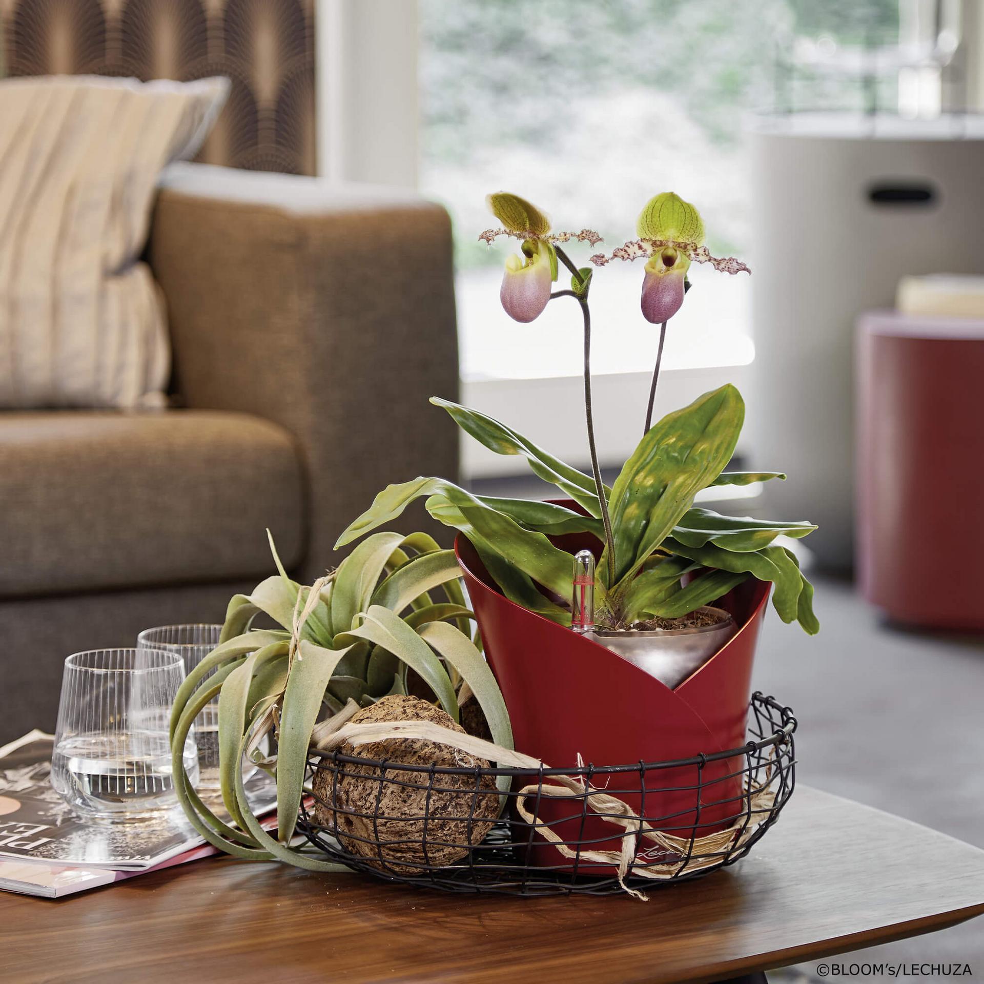 le_orchidea_product_addi_05