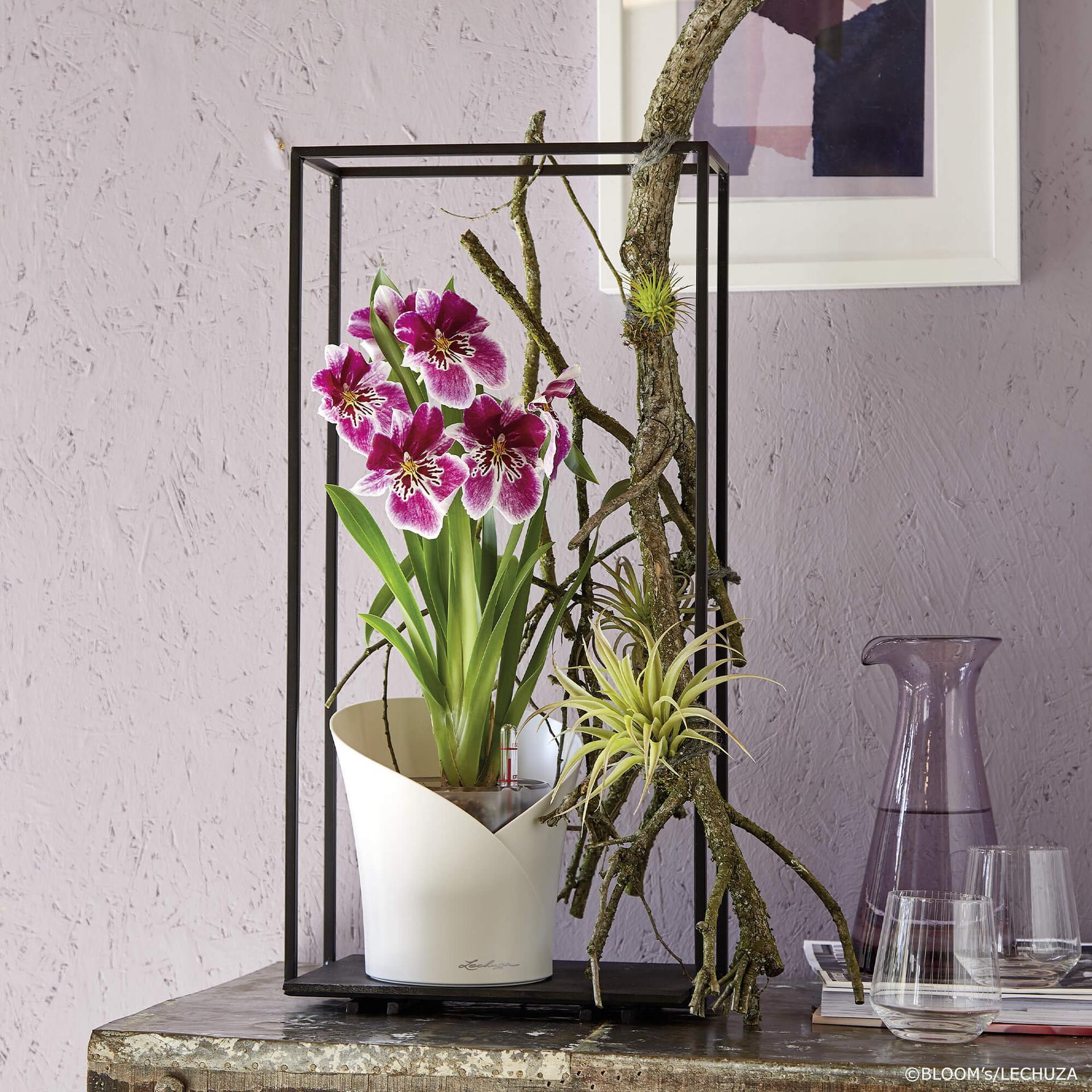 le_orchidea_product_addi_06