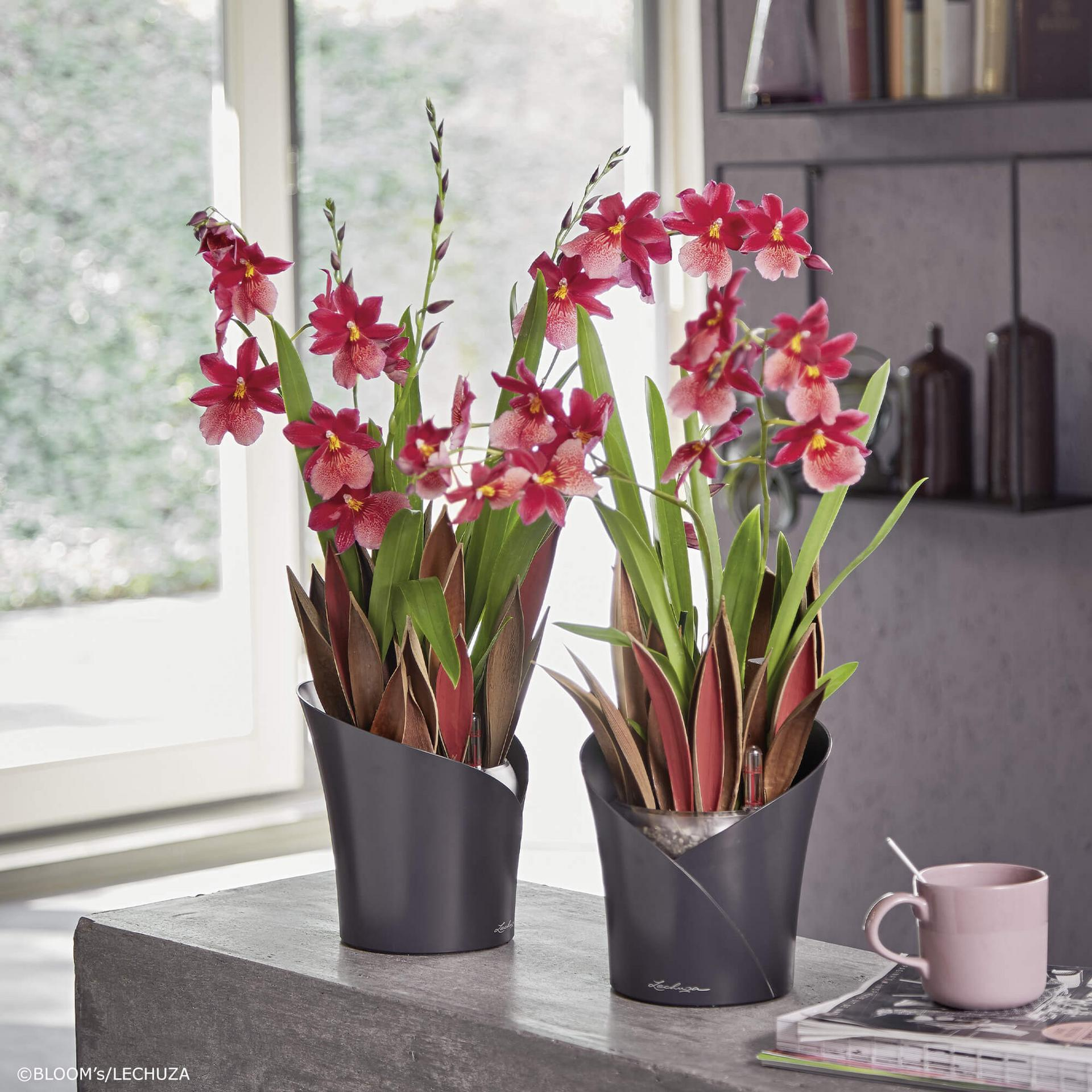 le_orchidea_product_addi_07