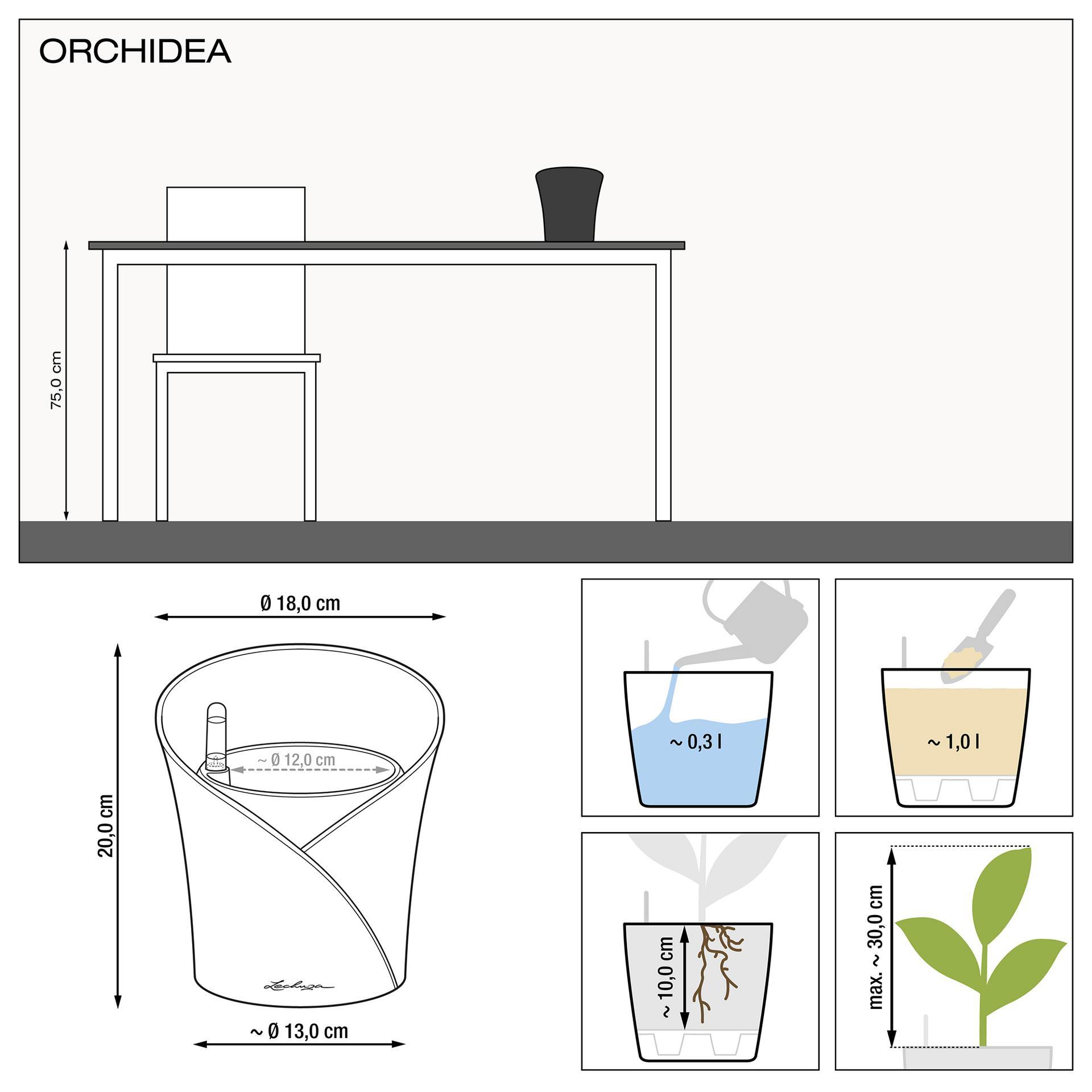 le_orchidea_product_addi_nz