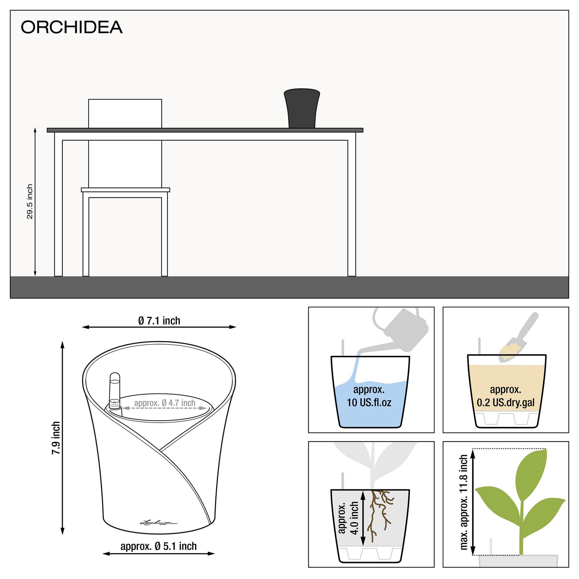 le_orchidea_product_addi_nz_us