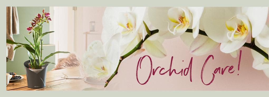 ORCHIDEENPFLEGE Tipps und Tricks