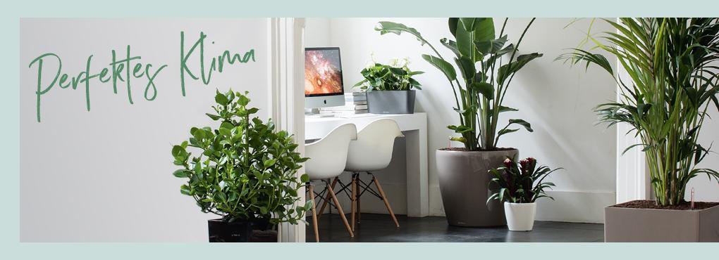 Das perfekte Klima für ein grünes Zuhause
